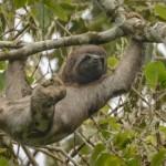 slothbg